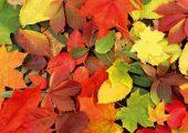 _lnaceb-lnac__xl_446_podzimni_listy